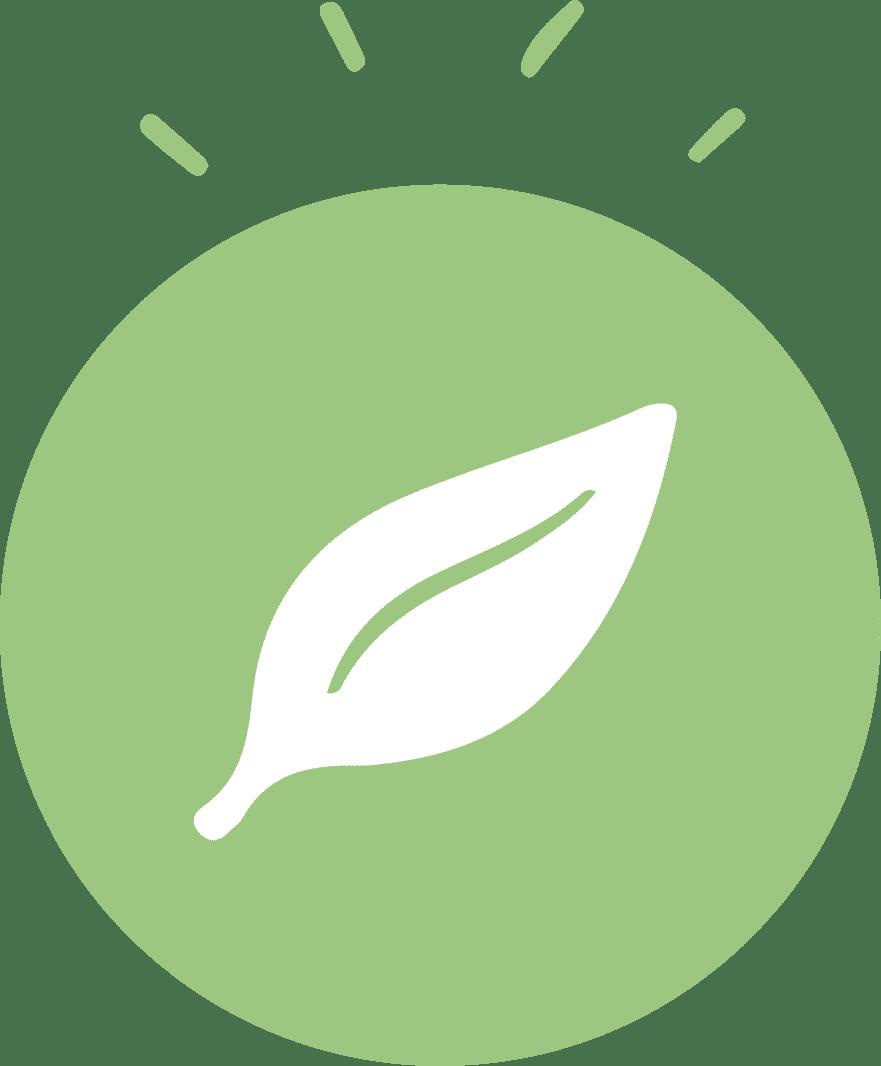 spiruline-feuille