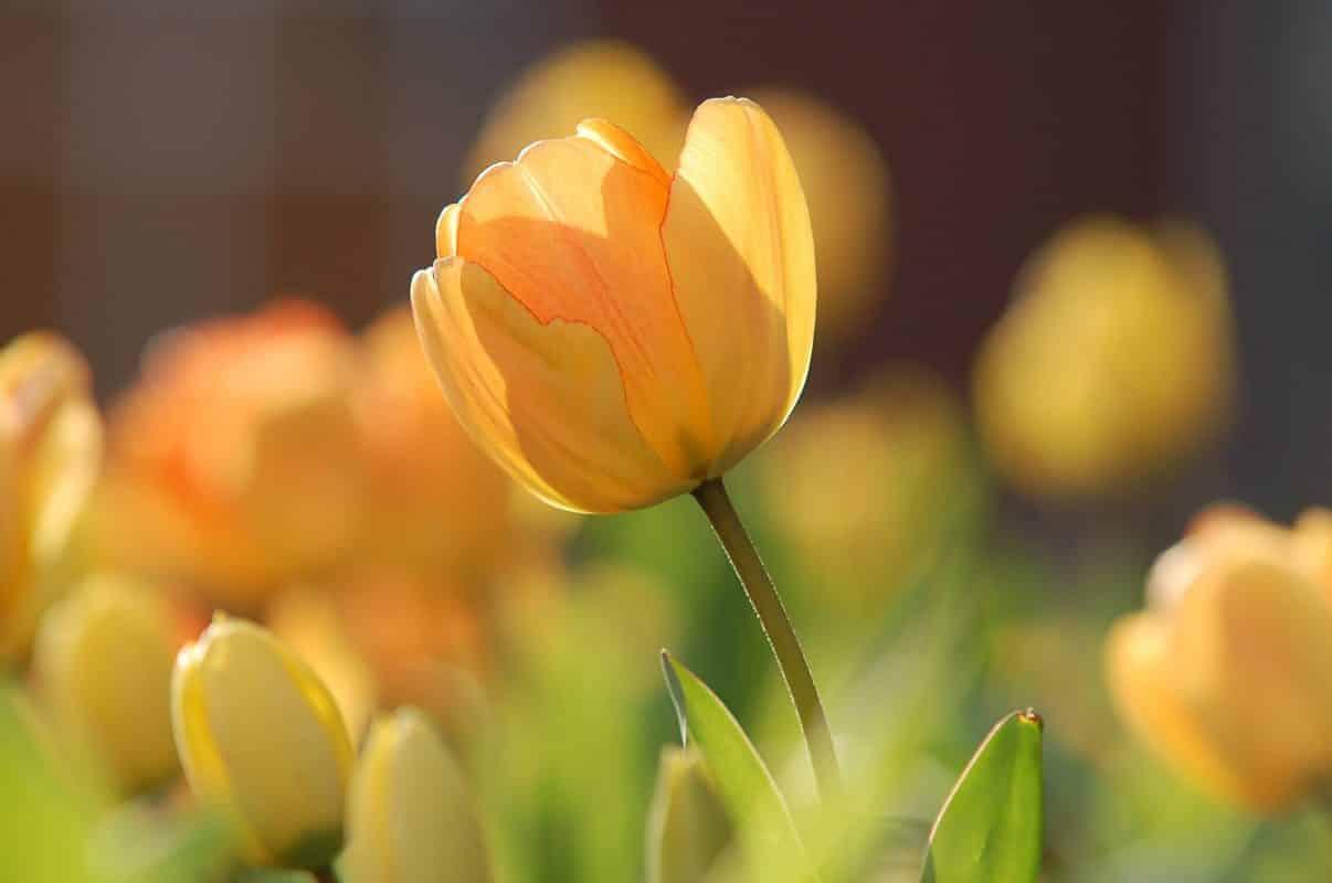 fleur jeune rhinite allergique