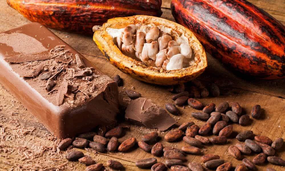 Que-faire-avec-feve-de-cacao