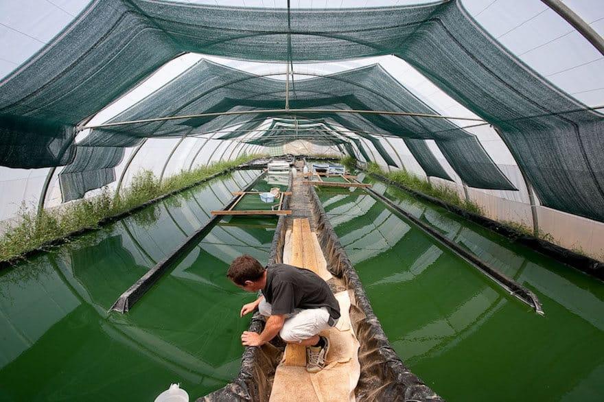 bassin aquaculture spiruline
