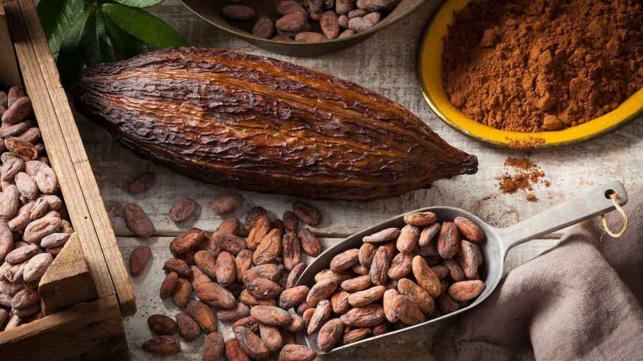 perte de poids de poudre de cacao bruto
