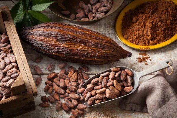 feve-de-cacao-bienfaits