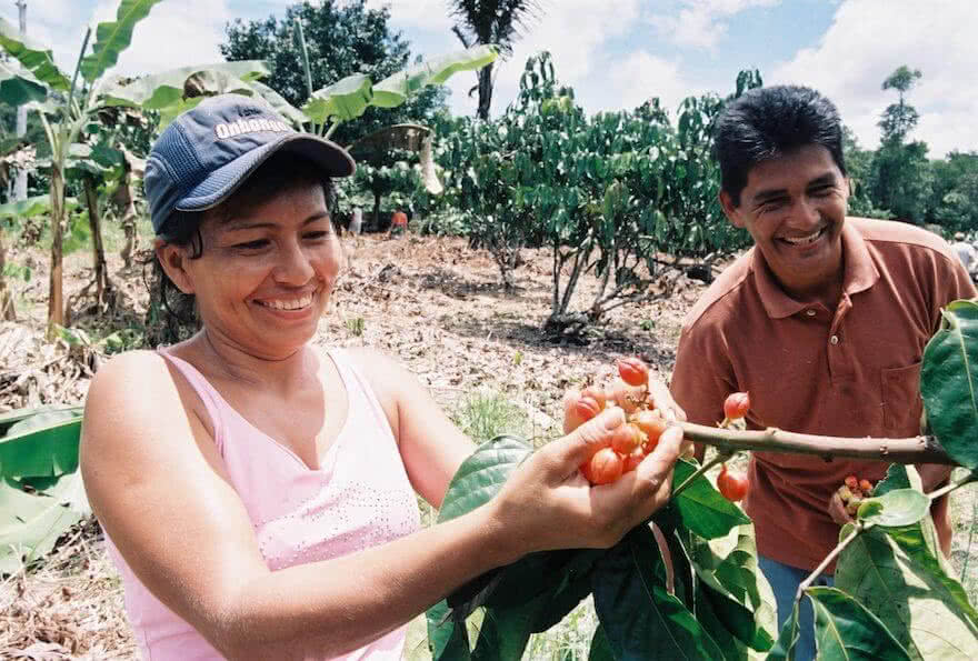 recolte guarana